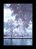 IR Tree 06 by randru