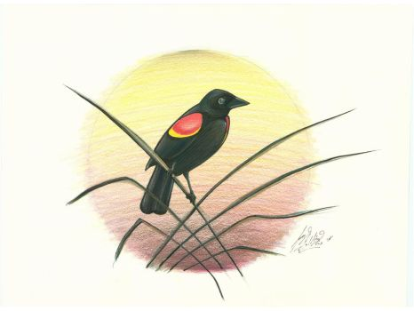 Red Winged Black Bird by NuclearGenie