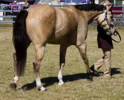 STOCK Canungra Show 2013-78 by fillyrox