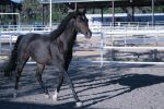 black horse stock 19 by xbr0kendevotion