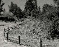 Road to perdition... by wolfcreek50