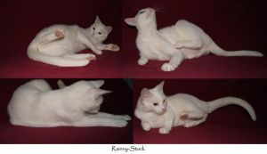 cat-yin- funny poses-stock-11 by Rainny-Stock