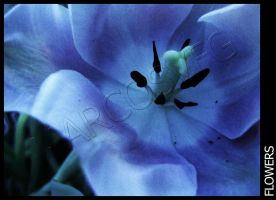 Flower-13 by MARCOSVFG