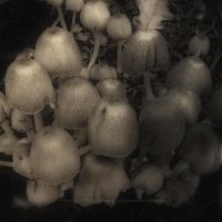 Little Mushrooms by bindii