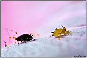 Aphid racicm??? by AimishBoy