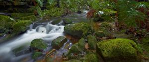 Flowing Moss - Blue Mountains by MarkLucey