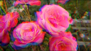 psychedelic rose by AliceHL