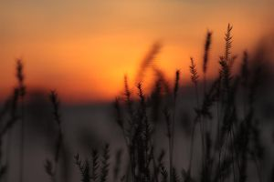 Grasses in the Flames 1 by UnderTheWildMoon
