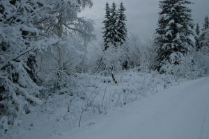 Snowy trees 4 by Arctic-Stock