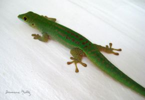 Bronze Gecko by Majnouna