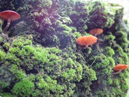 Moss and Mushroom growing by dantecosplayer