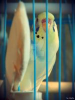 Parrot Gina. by mare037