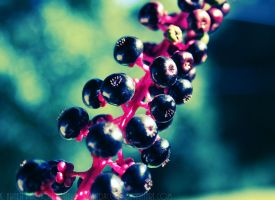 Berries... Berries by soPWNEDXcore