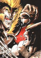Wolverine Sabretooth ACEO by ChrisMcJunkin