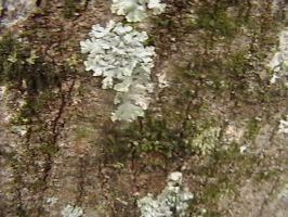Texture- Natural 02 by texture-resources