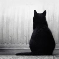 lonely cat by odpium