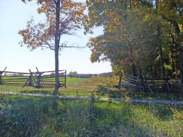 Fall Trees Fence 2 by vacuumslayer