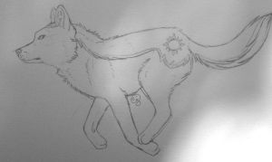 Doodle - Coyote by DeviousAngel5216