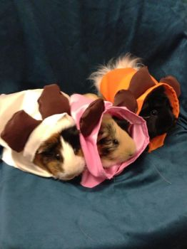 Ewok Guinea Pigs Star Wars Costume Cosplay by mch2020moehunt