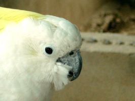 White Parrot by IshqAatish