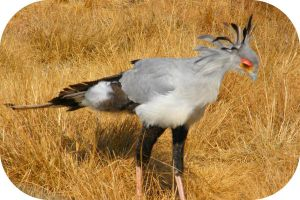 Secretary Bird IV by Jenvanw