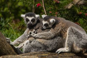 A Loving Family by linneaphoto