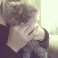 New kitty!! by courtneyrodgers