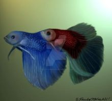 Betta Fish Harmony by youlittlemonkey