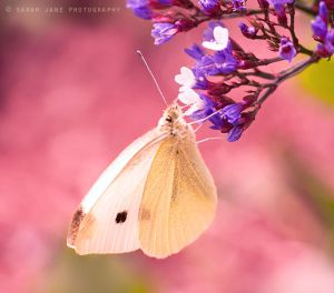 .:: Laugh at gilded butterflies ::. by Whimsical-Dreams