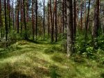 Forest 1 by MASYON