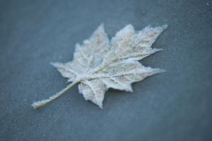 Day 312: Morning, Frost by Kaz-D