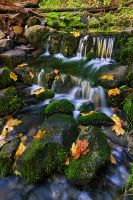 Fern Spring by Mashuto