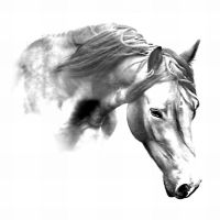 Horse by nectar666