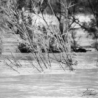 The River III by NNarcissus