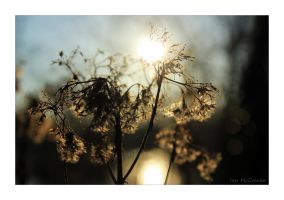 Blessed with winter sunlight . by 999999999a