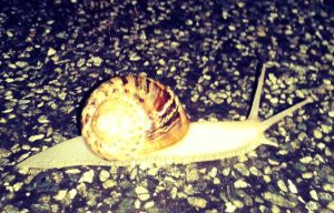 hi little snail, where are you going? by lalliphotography