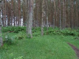 Stock ~ Forest, Path by CaitlinDickson