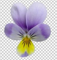 04 pansies+transparent by ForestGirlStock