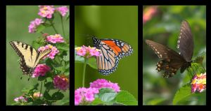 Butterfly Triptych by desmo100