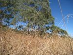 Drought Grass by 1Frothy