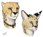 Cheetah and Serval Color Expirament by TitusW