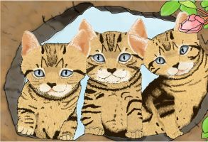 Three Kittens in a Tree by Meorow