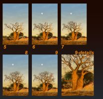 Baobab2 for Mieke by Fiery-Fire