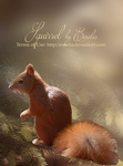 Squirrel - Png-file by Euselia