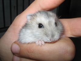Hamster in a hand by Marivel87