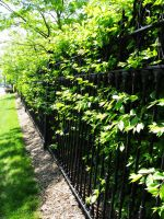 Fenced Hedge by Contengent-Necessity