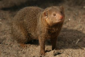 Mongoose 2 by Arctictouch