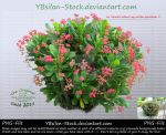 Exotic bush with red flowers by YBsilon-Stock by YBsilon-Stock