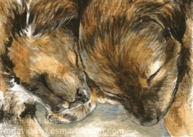 Sleeping puppies ACEO by Pannya