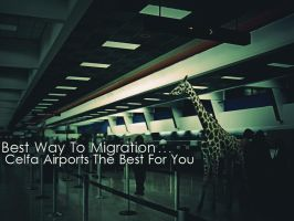 Animal Migration by A7md3mad